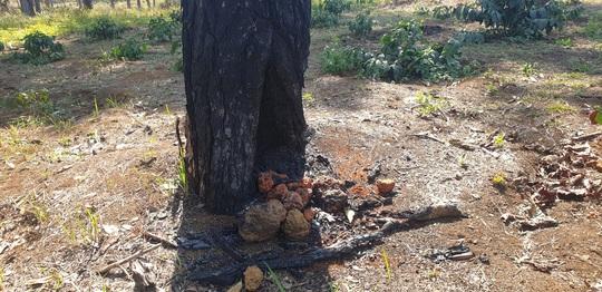 Lâm Đồng: Manh động ken gốc, đốt cây và đầu độc rừng còn đe dọa người dân phản ánh - Ảnh 5.