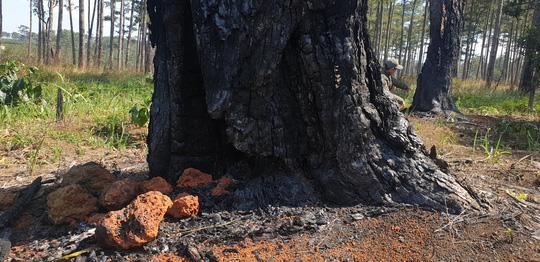 Lâm Đồng: Manh động ken gốc, đốt cây và đầu độc rừng còn đe dọa người dân phản ánh - Ảnh 4.