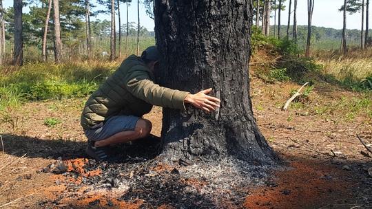 Lâm Đồng: Manh động ken gốc, đốt cây và đầu độc rừng còn đe dọa người dân phản ánh - Ảnh 2.