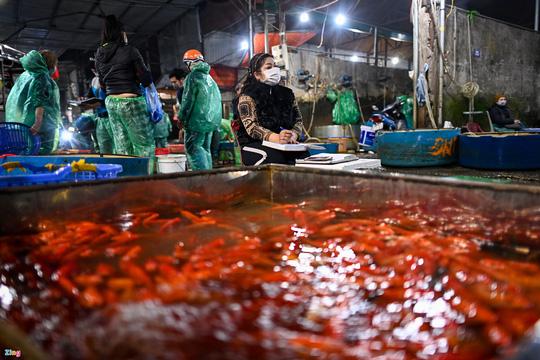 Cá chép tăng giá gấp 3 trước ngày Tết Táo quân - Ảnh 4.