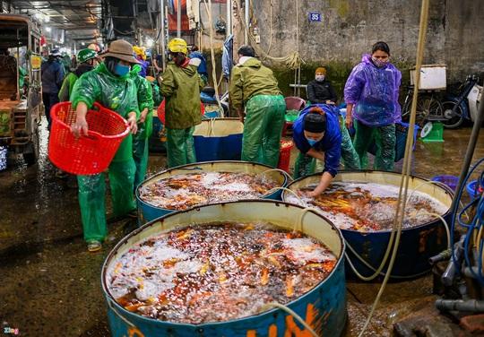 Cá chép tăng giá gấp 3 trước ngày Tết Táo quân - Ảnh 5.