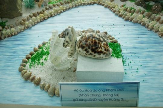 Độc lạ bộ sưu tập vỏ ốc ở Đà Nẵng - Ảnh 10.