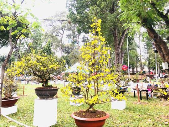Khai mạc Hội Hoa Xuân Tân Sửu tại công viên Tao Đàn - Ảnh 4.
