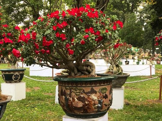 Khai mạc Hội Hoa Xuân Tân Sửu tại công viên Tao Đàn - Ảnh 5.