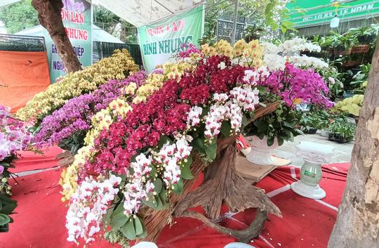 Những chậu hoa lan bằng gỗ lạ mắt ở chợ Tết - Ảnh 8.