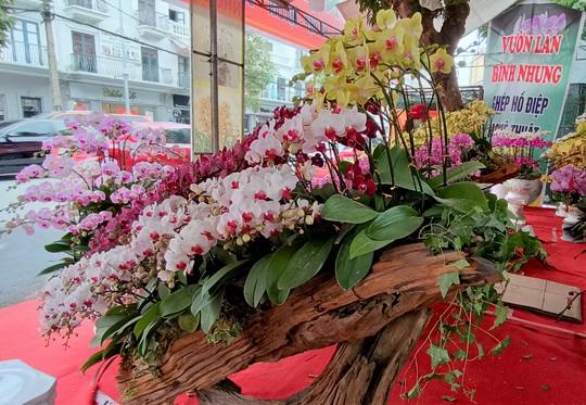 Những chậu hoa lan bằng gỗ lạ mắt ở chợ Tết - Ảnh 7.