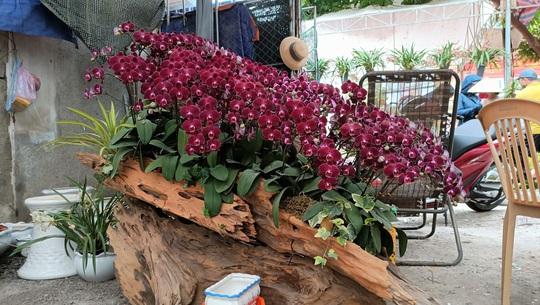 Những chậu hoa lan bằng gỗ lạ mắt ở chợ Tết - Ảnh 4.