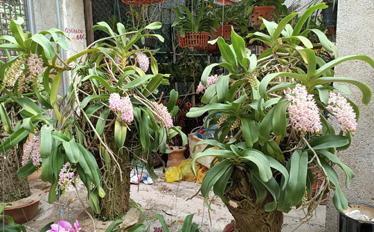 Những chậu hoa lan bằng gỗ lạ mắt ở chợ Tết - Ảnh 10.