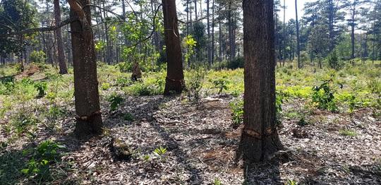 Rừng bị tàn phá lấn chiếm, huyện kiểm kê chỉ có 2 cây… bị tác động đã lâu! - Ảnh 3.