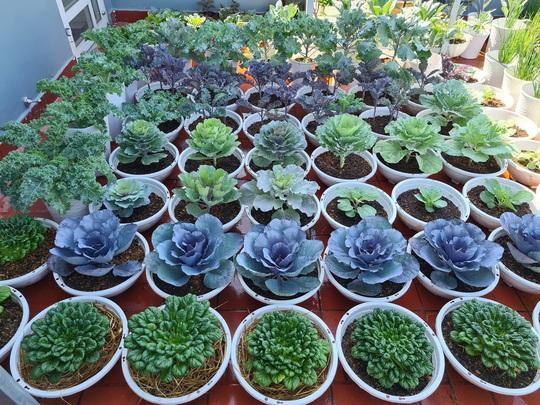 Vườn rau sân thượng có nhiều giống lạ - Ảnh 2.