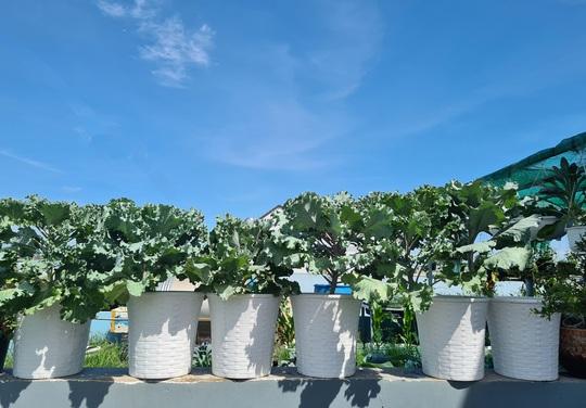 Vườn rau sân thượng có nhiều giống lạ - Ảnh 3.