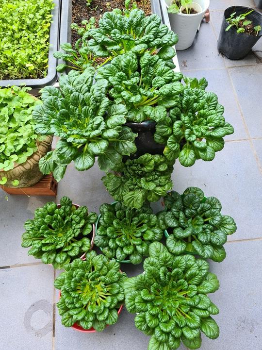 Vườn rau sân thượng có nhiều giống lạ - Ảnh 5.