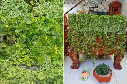 Vườn rau sân thượng có nhiều giống lạ - Ảnh 6.
