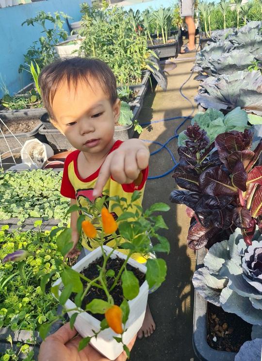 Vườn rau sân thượng có nhiều giống lạ - Ảnh 8.