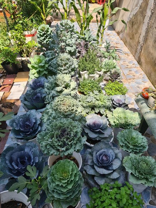 Vườn rau sân thượng có nhiều giống lạ - Ảnh 10.