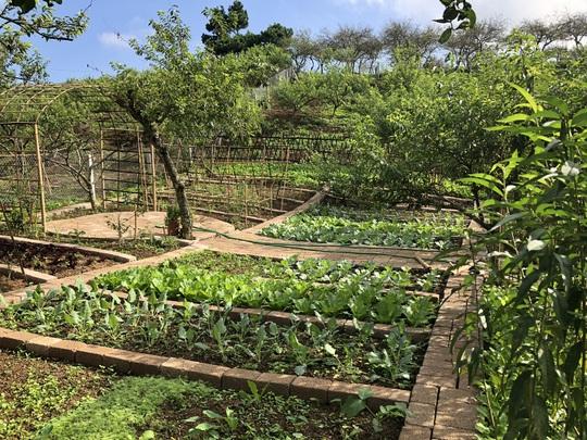 Xây nhà sống giữa vườn mận vì mắc kẹt ở Mộc Châu - Ảnh 7.