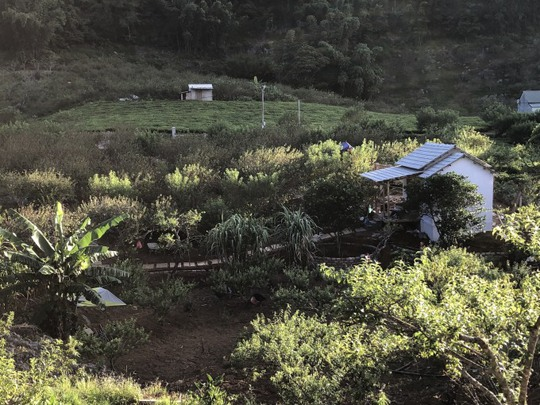 Xây nhà sống giữa vườn mận vì mắc kẹt ở Mộc Châu - Ảnh 1.