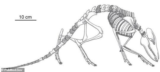 CLIP: sinh vật lạ lao xuống biển, biến hình thành loài lớn nhất thế giới - Ảnh 3.