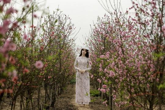 Hà Nội, Đà Lạt vào top điểm ngắm hoa xuân châu Á - Ảnh 1.