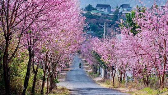 Hà Nội, Đà Lạt vào top điểm ngắm hoa xuân châu Á - Ảnh 2.