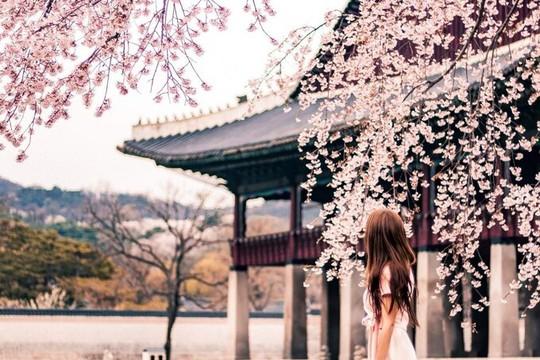 Hà Nội, Đà Lạt vào top điểm ngắm hoa xuân châu Á - Ảnh 3.