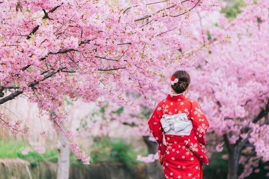 Hà Nội, Đà Lạt vào top điểm ngắm hoa xuân châu Á - Ảnh 4.