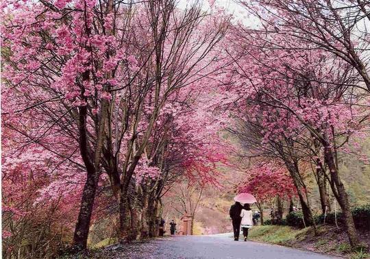 Hà Nội, Đà Lạt vào top điểm ngắm hoa xuân châu Á - Ảnh 5.