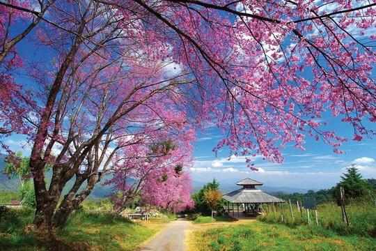 Hà Nội, Đà Lạt vào top điểm ngắm hoa xuân châu Á - Ảnh 6.