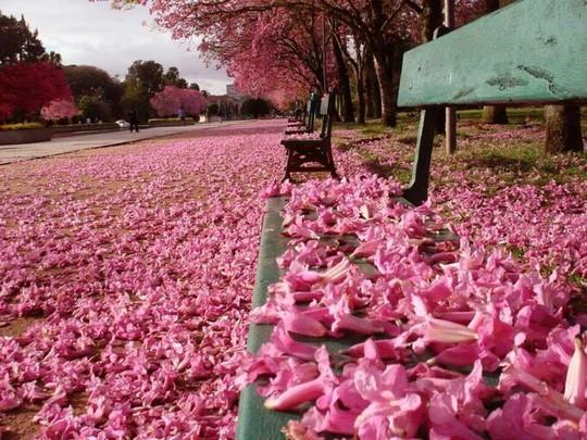 Hà Nội, Đà Lạt vào top điểm ngắm hoa xuân châu Á - Ảnh 8.