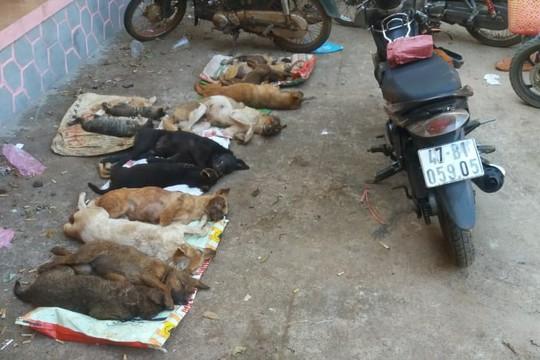 Vây bắt đối tượng trộm chó trong đêm, thu gom hàng chục con chó, mèo - Ảnh 2.