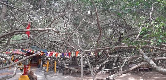 CLIP: Ngất ngây trước vẻ đẹp yên bình của rừng gừa ở miền Tây - Ảnh 2.