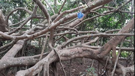 CLIP: Ngất ngây trước vẻ đẹp yên bình của rừng gừa ở miền Tây - Ảnh 5.