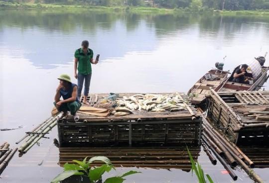 Cá chết hàng loạt trên sông Mã, 2 công ty thừa nhận xả thải - Ảnh 3.