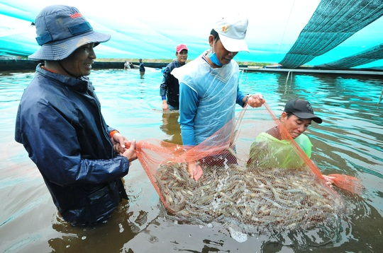 Việt Nam có thể trở thành cường quốc sản xuất, chế biến tôm số 1 thế giới - Ảnh 5.