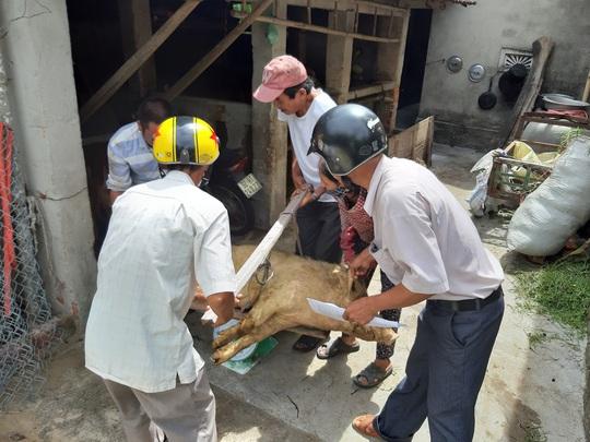 Họp HĐND Quảng Nam: Trình thông qua nơi không được phép chăn nuôi - Ảnh 1.