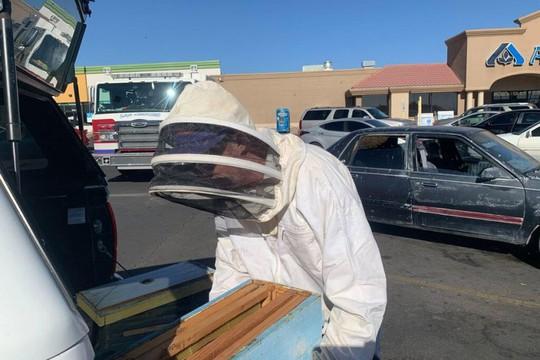 Chỉ 10 phút vào siêu thị, đàn ong mật 15.000 con chiếm xe hơi - Ảnh 3.