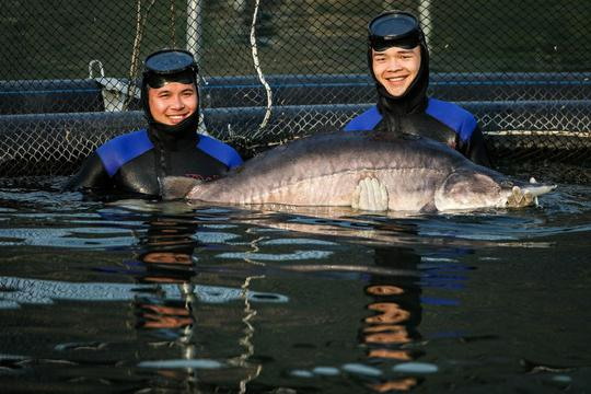 Cá tầm khổng lồ Beluga lần đầu xuất hiện tại Việt Nam - Ảnh 1.
