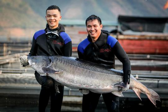 Cá tầm khổng lồ Beluga lần đầu xuất hiện tại Việt Nam - Ảnh 2.
