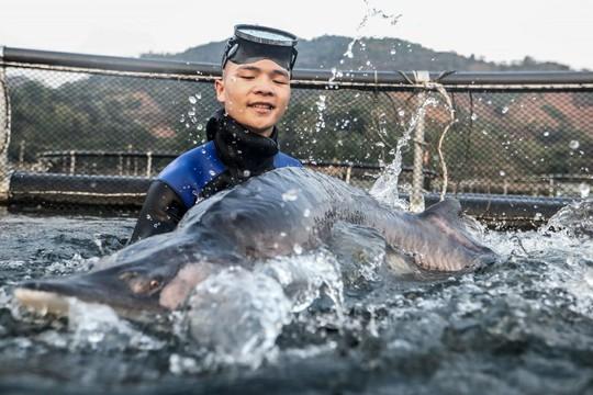 Cá tầm khổng lồ Beluga lần đầu xuất hiện tại Việt Nam - Ảnh 5.