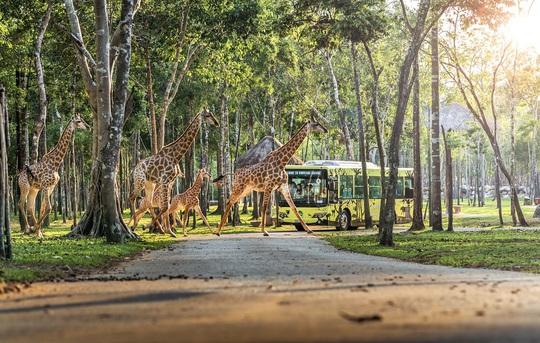 Vingroup khai trương siêu quần thể nghỉ dưỡng, vui chơi, giải trí tại Phú Quốc - Ảnh 12.