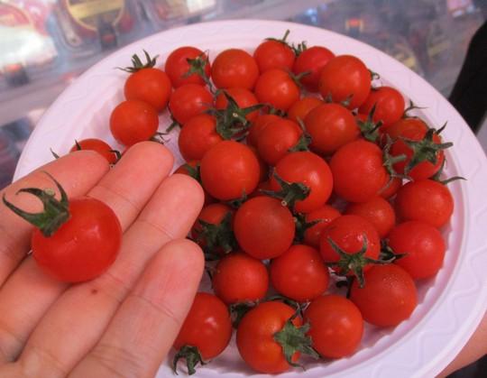 Ngỡ ngàng với loại cà chua Lâm Đồng giá nửa triệu đồng/kg - Ảnh 5.