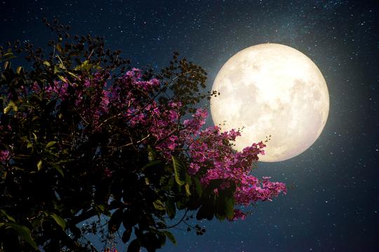 Đêm nay và mai, Việt Nam chiêm ngưỡng siêu trăng hồng kỳ ảo - Ảnh 1.
