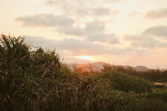 Phú Yên không chỉ có hoa vàng trên cỏ xanh - Ảnh 27.