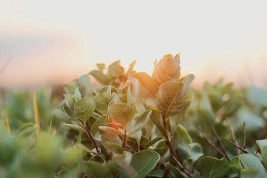 Phú Yên không chỉ có hoa vàng trên cỏ xanh - Ảnh 29.