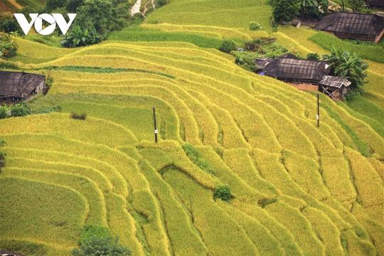 Ngắm Hoàng Su Phì đẹp tựa tiên cảnh khi bước vào mùa vàng - Ảnh 12.