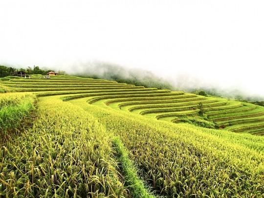 Ngắm Hoàng Su Phì đẹp tựa tiên cảnh khi bước vào mùa vàng - Ảnh 15.