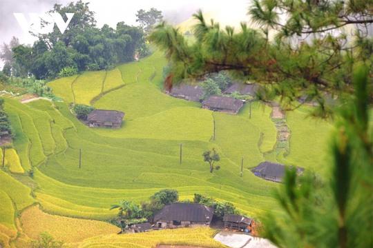 Ngắm Hoàng Su Phì đẹp tựa tiên cảnh khi bước vào mùa vàng - Ảnh 3.