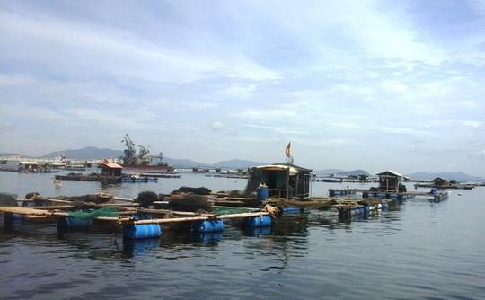 Gần 30 tấn cá chết bất thường dọc bờ biển Thanh Hóa - Ảnh 1.