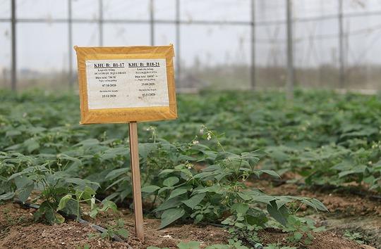 Trồng rau bằng smartphone, chị nông dân đều tay thu tiền tỷ - Ảnh 5.