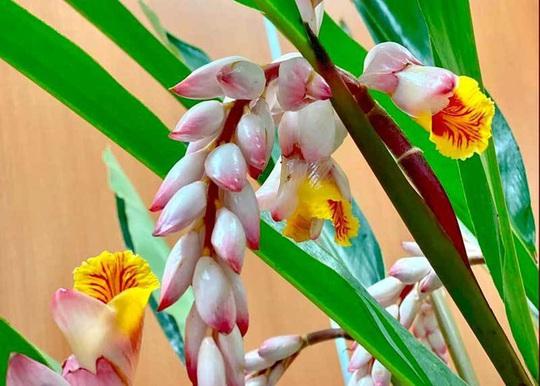 Hoa dại bờ bụi siêu đắt đỏ, mối buôn bán 2.000 cành/ngày - Ảnh 3.